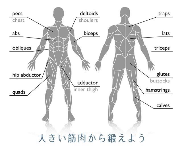 筋肉マップ
