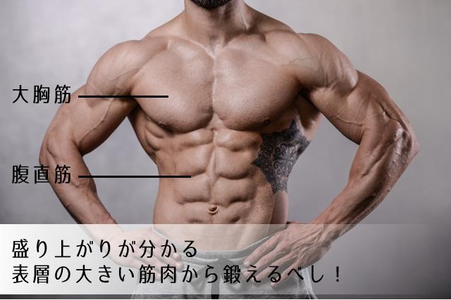 盛り上がりが分かる表層の大きい筋肉を鍛える