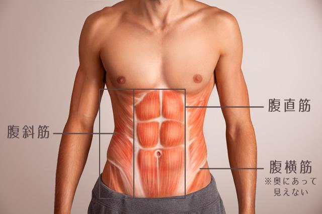 腹直筋、腹斜筋、腹横筋の図解