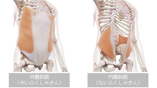 腹斜筋の画像(外腹斜筋・内腹斜筋)