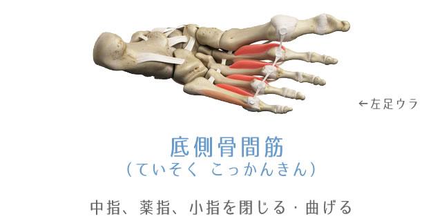 底側骨間筋