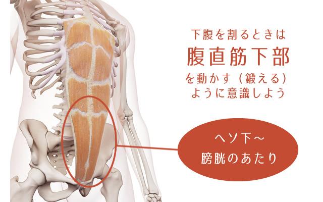 下腹筋トレは腹直筋下部を動かす