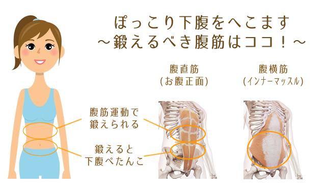 ぽっこり下腹を凹ます腹直筋下部と腹横筋